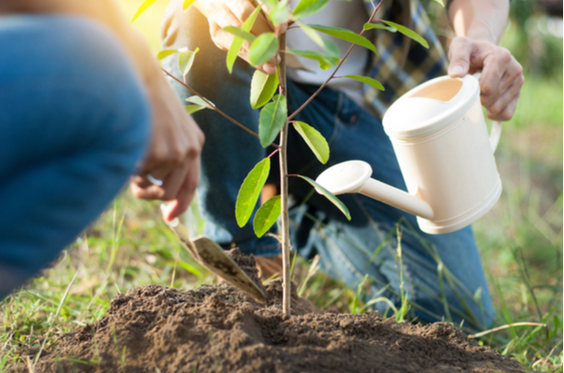 People planting a tree  What we're doing to tackle climate change shutterstock 1008121234
